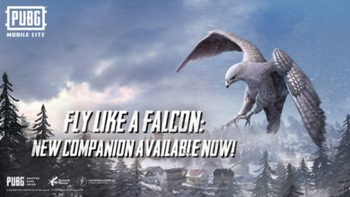 falcon in pubg mobile lite, falcon companion