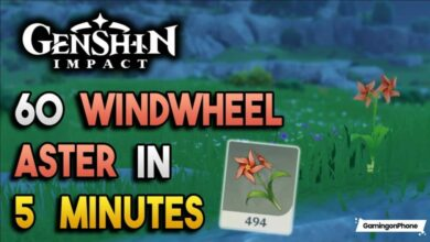 windwheel aster